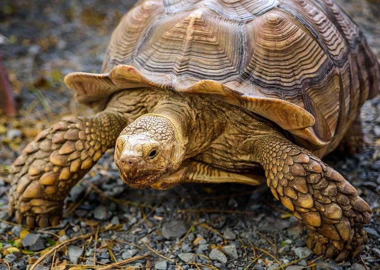 tortoise shell makapu'u Hawai'i ranch photo