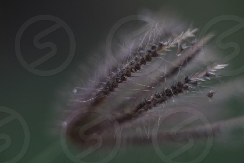 nature close up photo