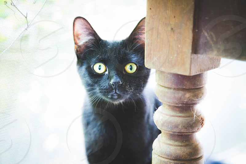 cat pet eyes feline curious alert kitty photo