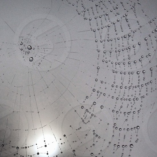 Morning Dew on a Spiders Web photo