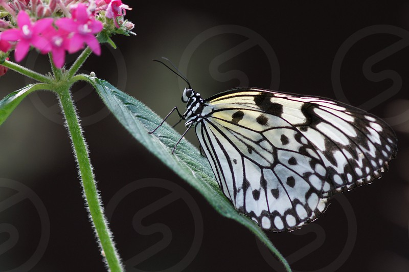 Butterfly Floral Nature photo
