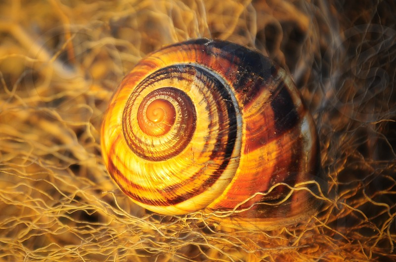 brown snail on brown strings photo