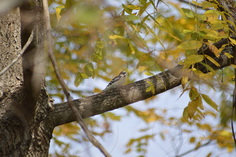 white and brown bird perched on tree branch photo