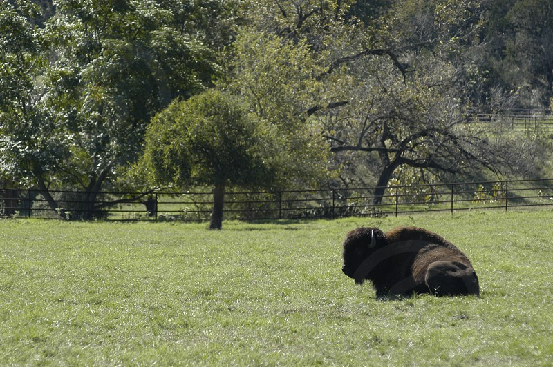 hill country texas cibolo nature road dirt sky rustic country summer bison buffalo ranch farm photo