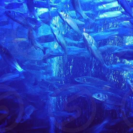 shoal of gray fishes photo