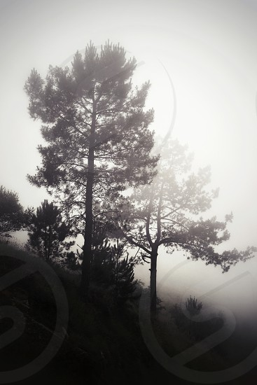 two trees covered with fogs photo