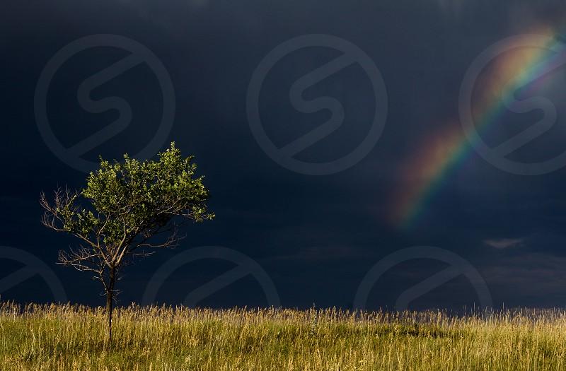 Lone tree grass dark clouds and rainbow. (Taken near Boulder Colorado.) photo