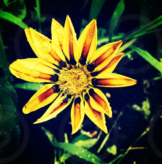 #flower #flowerbed #summer #macro #garden #grow #virginia #virginiaisforlovers #mollygilbert photo