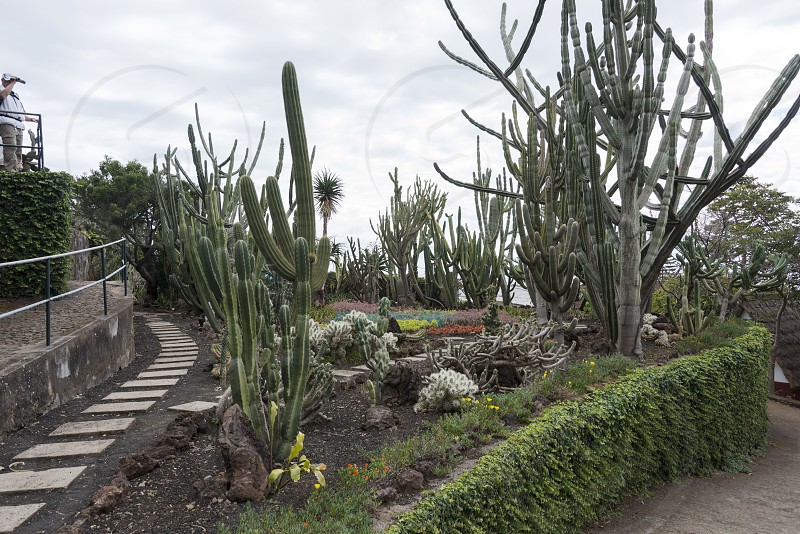 cactus plants in botanical garden Funcahl on the portuguese island Madeira photo