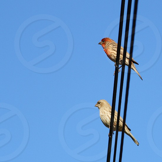 Seen from below two small birds are perched on a wire against a bright blue sky. photo