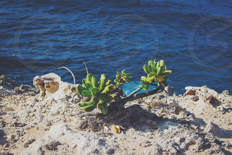 green succulent plant on a rock near water  photo