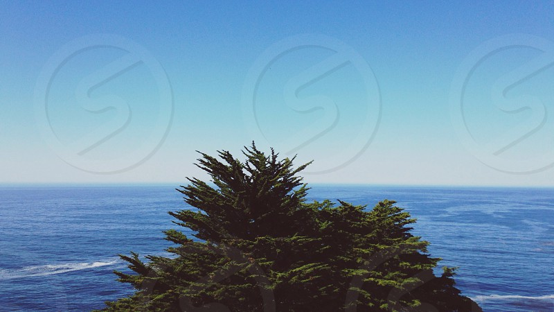 green trees and ocean view photo
