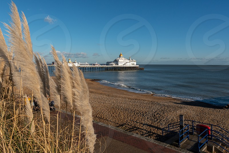 EASTBOURNE EAST SUSSEX/UK - JANUARY 28 : Pampas Grasses in front of Eastbourne Pier in East Sussex on January 28 2019. Two unidentified people. photo