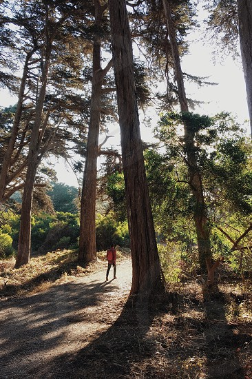 person wearing red shirt between green leafed trees photo