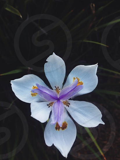 white and violet flower photo
