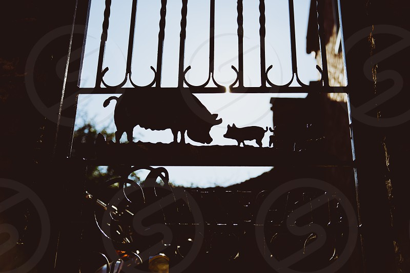farm farmer gate pig piglet animal meat food metal sunset silhouette day summer photo