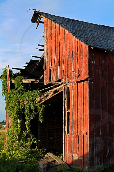 red wooden barn with green vines photo
