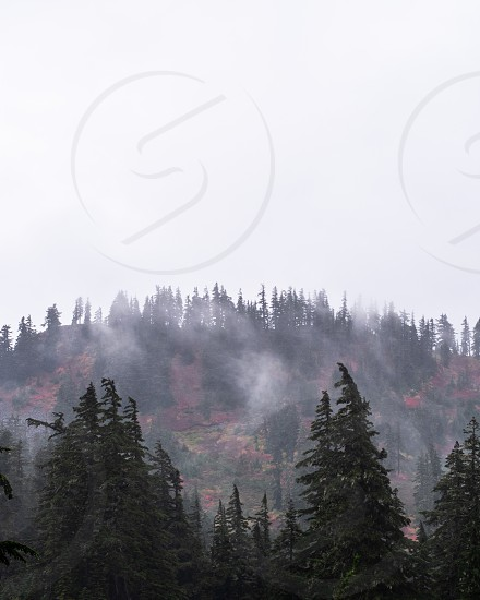 Misty Mountainside photo