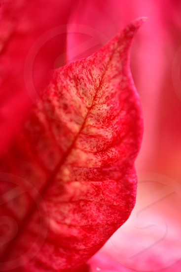 red and brown leaf in macro lens photography photo