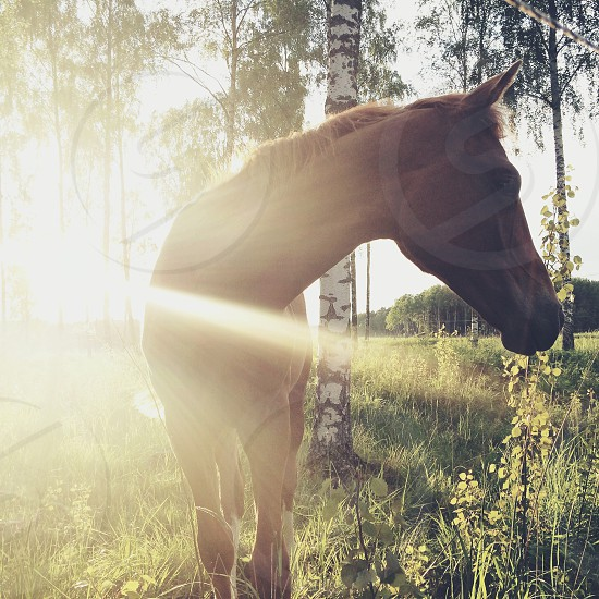 brown horse photo