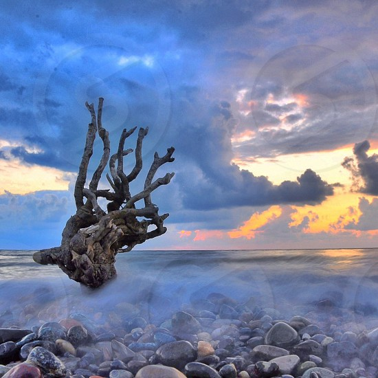 nature photography photo