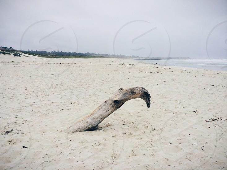 large driftwood log on beach photo