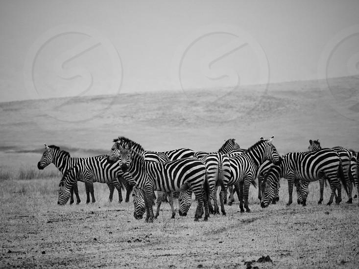 in Tanzania photo