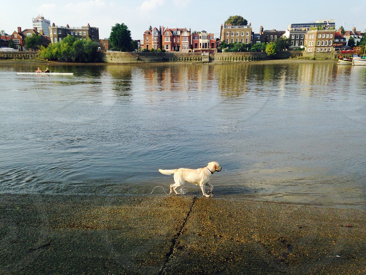 Walking Harvey along the Thames. Taken a few months ago. photo