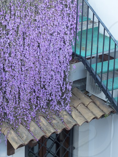 Teal stairs tucked behind draped wisteria. Taken in Lecce Puglia Italy photo