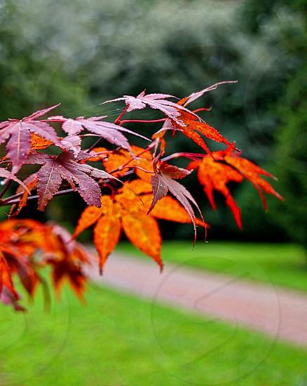 Autumn Landscape at Westonbirt Arboretum Oxfordshire UK photo