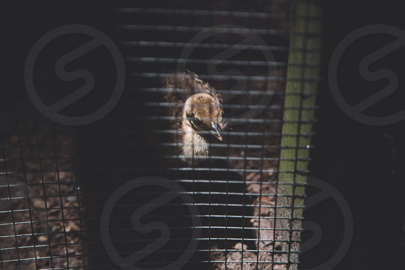brown feathered bird inside cage photo