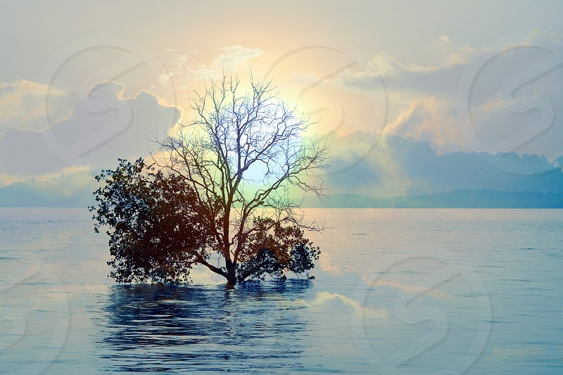 brown leaf tree planted on body of water under cloudy sky during daytime photo