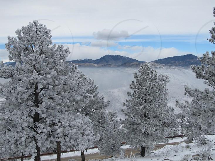 white trees photo