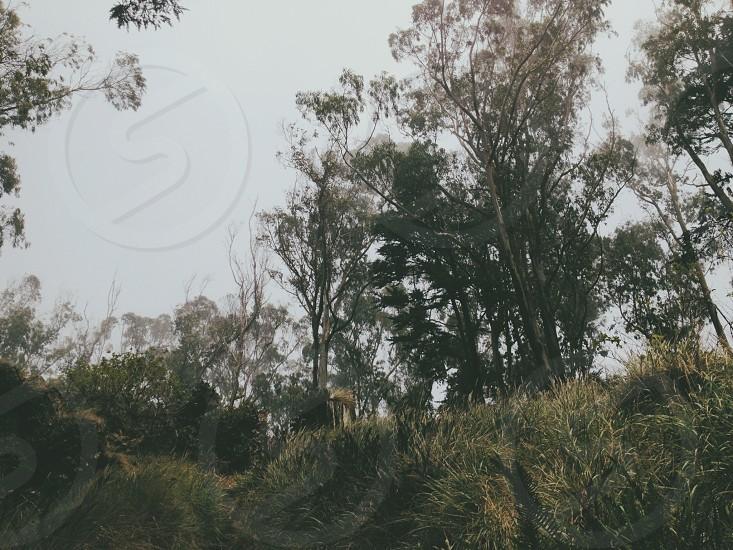 San Fransisco's magical forest Mt. Davidson photo