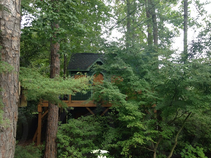 green and brown wooden tree house photo