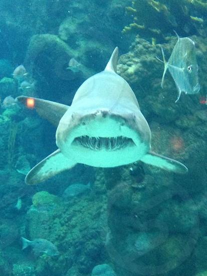 Shark eye level close up photo