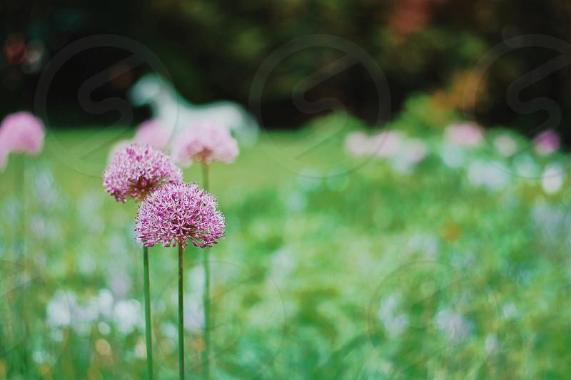 pink flower during daytime photo