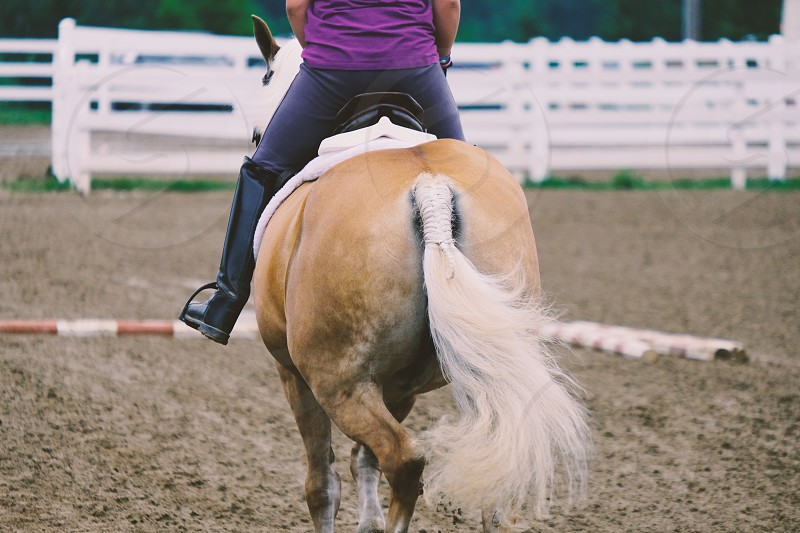 Person riding horse in show arena. photo