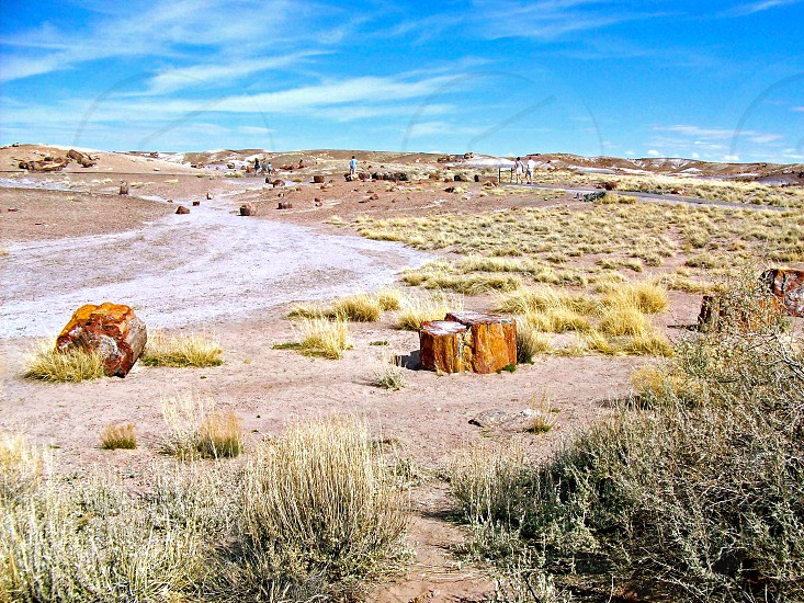 Petrified Forest National Park - Arizona - USA photo
