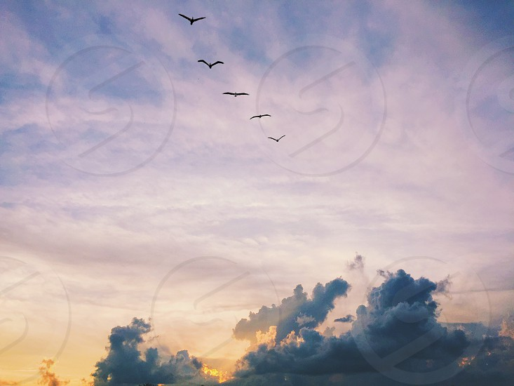 Birds and sunsets  photo
