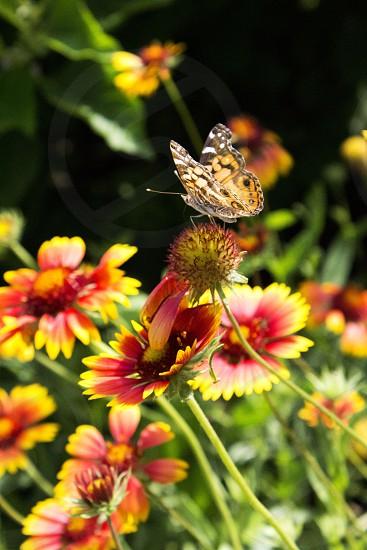 Moth on flowers photo