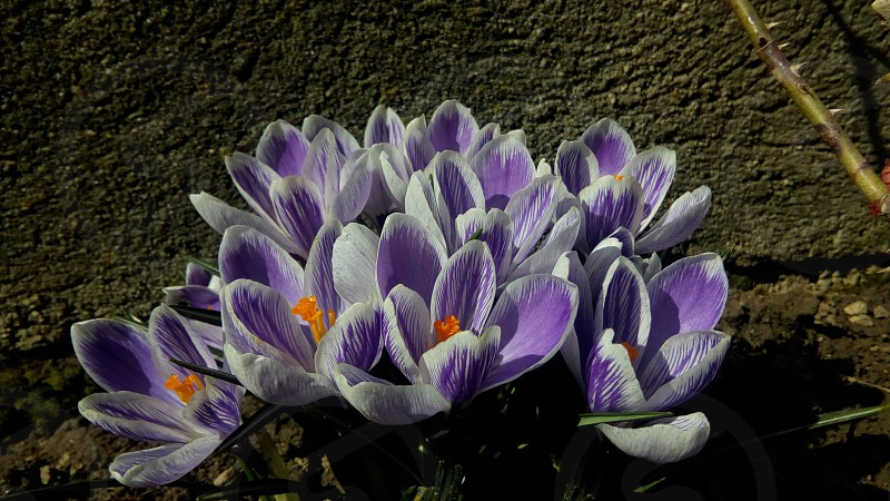 springtime photo