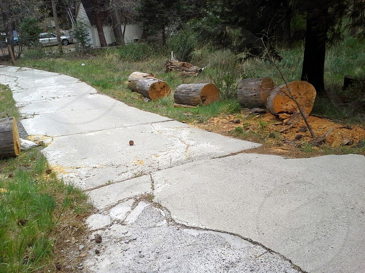 broken driveway fallen tree photo
