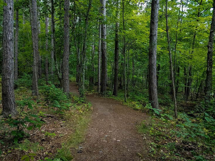 Trail in the Forest photo