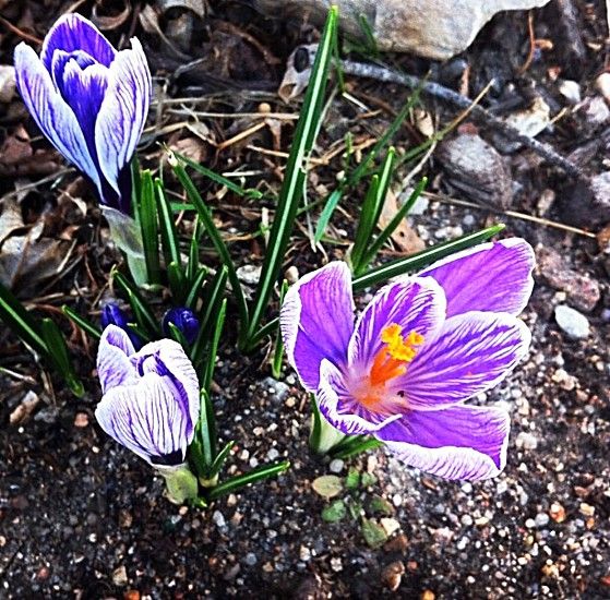 Spring has sprung. photo