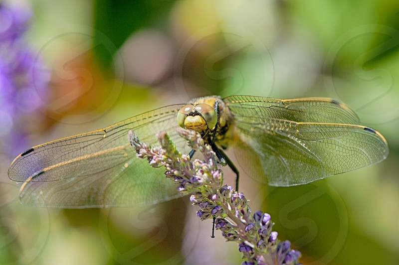 patterns wings macro insect dragonfly photo