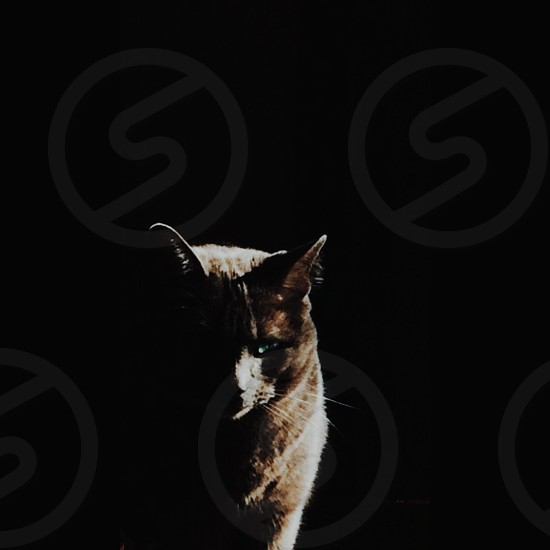 cat emerging from the darkness photo