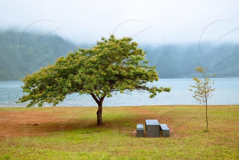 green tree beside beach photo