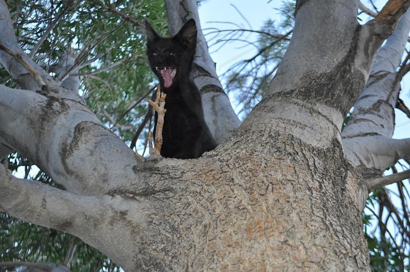 Scary black cat  photo