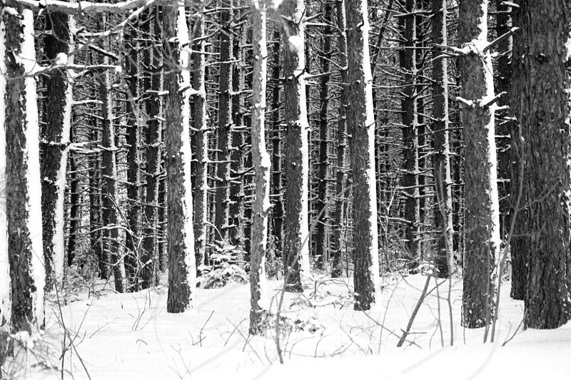 Jefferson New Hampshire snow covered trees photo